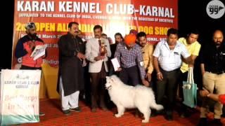 Best in Show 2nd Open Show | Karan Kennel Club - Karnal | 18 Feb 2017