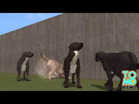 Walka psów kobieta chce miliona dolarów odszkodowania po tym jak jej psy zabiły beagla