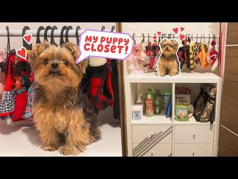Xxx Mp4 Building My Dog A Closet DIY 3gp Sex