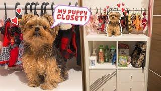Building My Dog A Closet - DIY