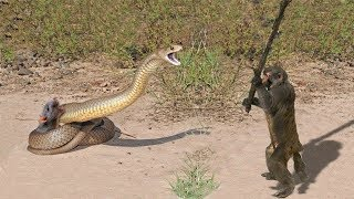 LIVE: Snake vs Porcupine, Elephants & Crocodiles - Real Fight attacks - Wild Discovery Animals
