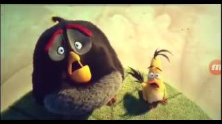 The Angry Birds Movie   Chuck and Bomb s Flashbacks of Mighty Eagle Clip