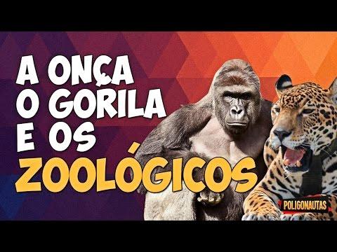 A Onça o Gorila e os Zoológicos Fora da Caixa