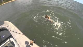 Wobbygong Shark 02022016 fb