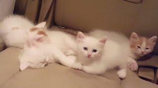 🔥مفاجأه لأولادي أربع قطط كيووووت مررره🔥