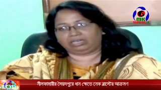 Saidpur news ধান ক্ষেতে নেক ব্লাস্ট 2017