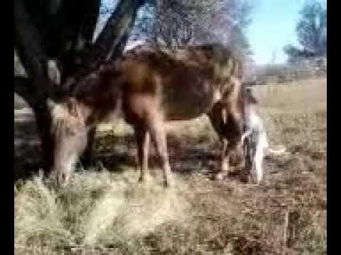 Xxx Mp4 Dog And Pony Show Overbrook KS 3gp 3gp Sex