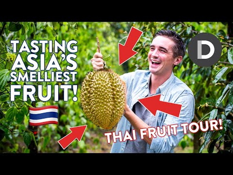 Xxx Mp4 TRYING DURIAN Smelliest Fruit In The World THAI FRUIT TOUR 3gp Sex