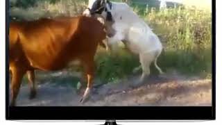 pc mobile Download The best of whatsapp videos   Funny Videos