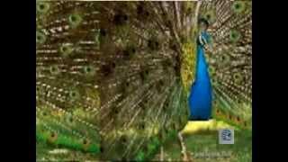 Jhamjhama Jham Bristi- satti sur mile mishe