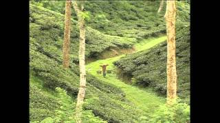 Visit Bangladesh The Tea Gardens