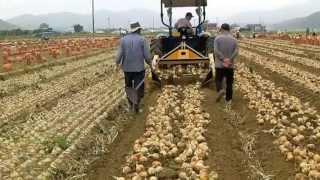 두루코코툴/DR-1400CA/감자,고구마수확기-트랙터용/2두둑씩수확/50마력이상/지원금365만/농기계-거류기업/코코툴/골리앗