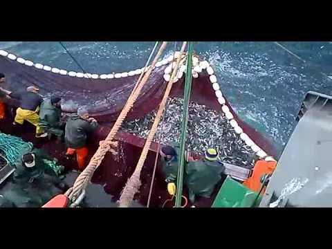 La pêche à la sardine au Maroc larache