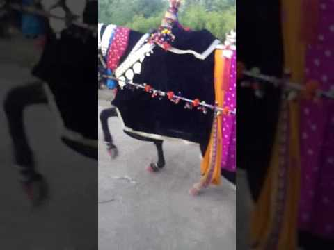 Xxx Mp4 Zuljana Village Dulat Khan Mirjat Tandoallayar 3gp Sex