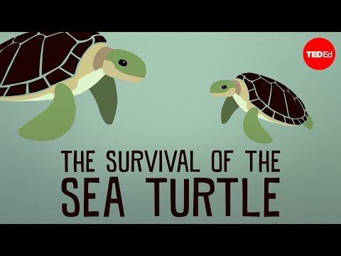 The Survival of the Sea Turtle