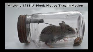 Rare Antique 1911 U-Neek Jar Mouse Trap In Action. Mouse Trap Monday