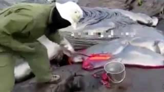 شاهد كيف يتم اخذ عينات من الحمم البركانية !! 🙀🙀