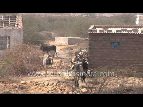 Village in the Rann of Kutch, Gujarat