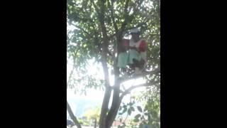 Pelé cagando em cima da árvore.
