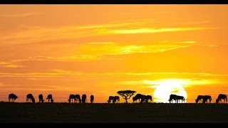 ► THE GREATEST ANIMAL MIGRATION (HD, Full Documentary)