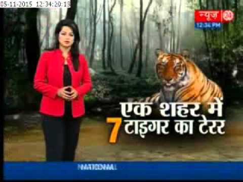Tiger terror in Bhopal