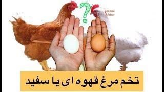 تخم مرغ قهوه ای بهتر است یا سفید؟ | کدام یک سالمتر است ؟