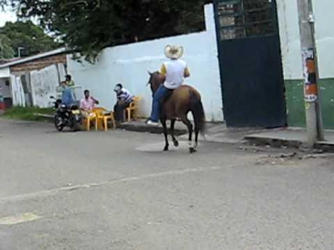 CABALLO TROCHADOR COLOMBIANO