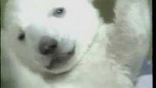 Klondike & Snow - 2 Baby Polar Bears