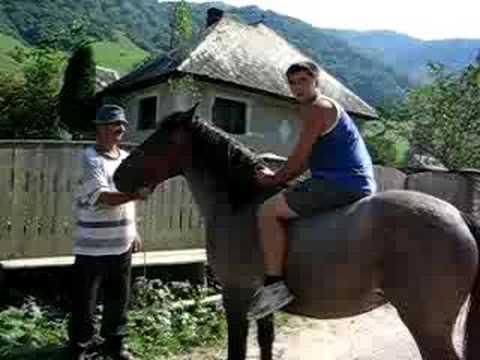 Calul naravas si primul incalecat al lui Raul