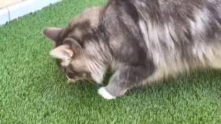 Süss. Unsere Katzen bekommen neuen Rasen