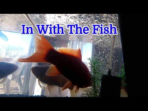 Xxx Mp4 In With The Fish 1115 3gp Sex