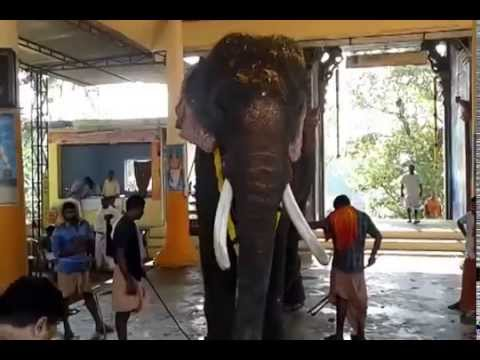 Xxx Mp4 Thrikkadavoor Sivaraju In Kalanjoor Mahadeva Temple 2 3gp Sex