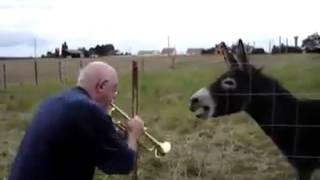 Gomari kengetar me klarinet