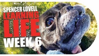 Learning Life with Spencer Lovell | Week 6: Dog & Cat
