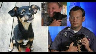 Police Officer Adopts the Puppy He Saved from a Hot Car