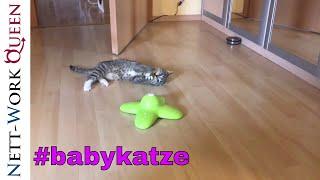 Babykatze 11 Wochen alt spielt