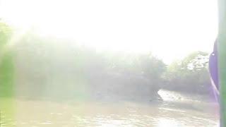 চলুন দেখে আসি সুন্দরবনে কিভাবে বাঘ দেখা যায়/bengol tiger/royel bengol tiger/sundharban tiger
