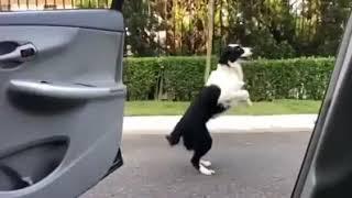 Canine Kiki Challenge!