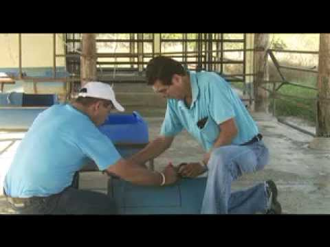 Construcción de un Bebedero barato de agua para ganado