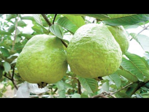 Xxx Mp4 Top 10 Fruits For Diabetes Patients 3gp Sex