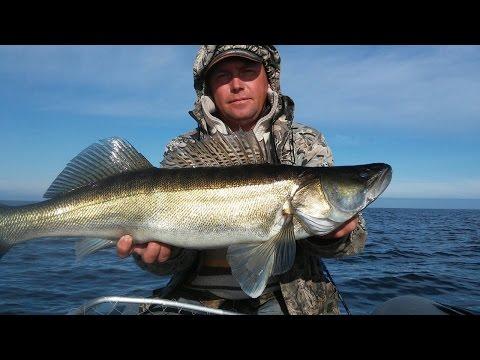 судак на рыбинке летом видео