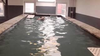 Dushi bij Honden Zwembad & Health Center Di Casa Romano