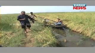 Farmer Sails Boat Into Paddy Field After Rain Damaged Crops