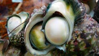 Seafood in Japan - Japanese Street Food in Okinawa