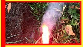 Best Way to Eliminate moles and gophers in your yard - $2 solution  in 2 minutes. Please Subscribe