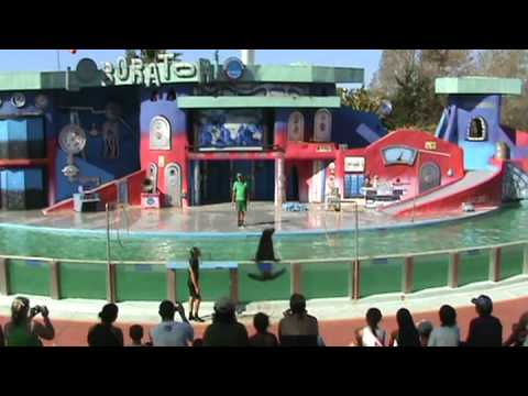 Mundo Marino 2009 Show de lobos Parte 1