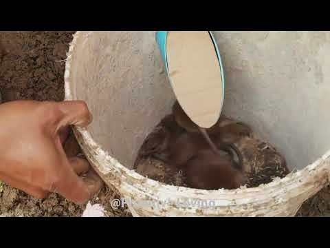 Best Mouse Trap With PVC Pipe And Deep Hole - Mouse/Rat Trap At Home