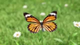 mindfullness meditation part1