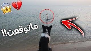 ردة فعل أذكى كلب في العالم اذا غرق صاحبه في البحر !! انصدمنا💔😱