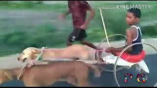 Comedy video Avatar Sakhi Saiya kutta se Girl by Barauli